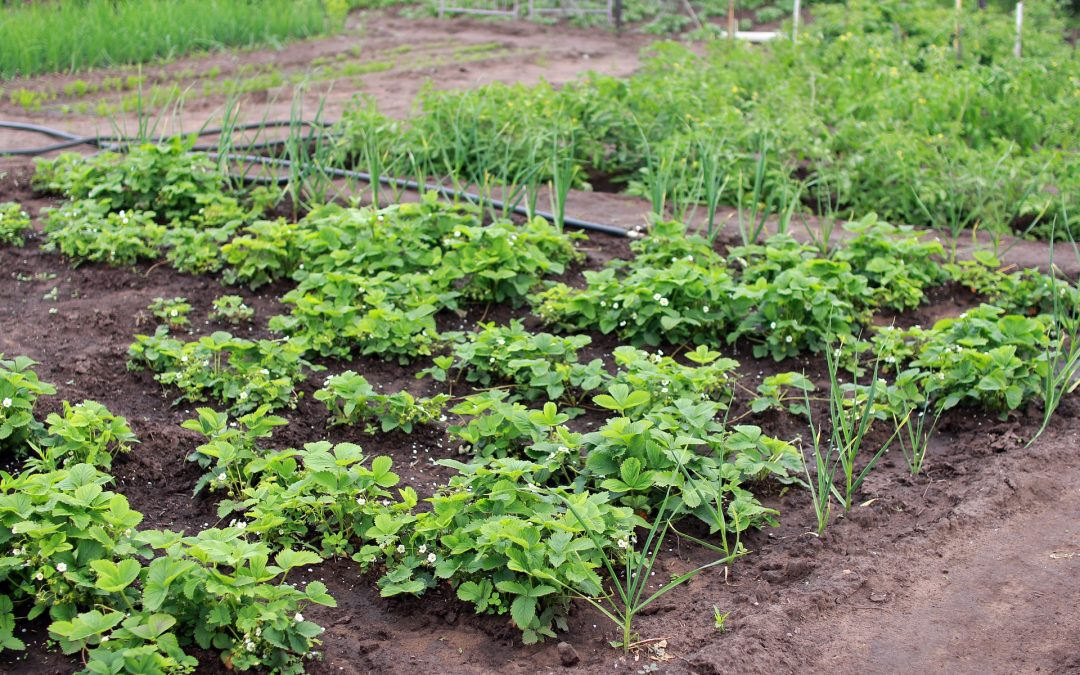 Conseils pour cultiver le potager parfait